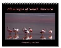flamingo-calendar-south-america